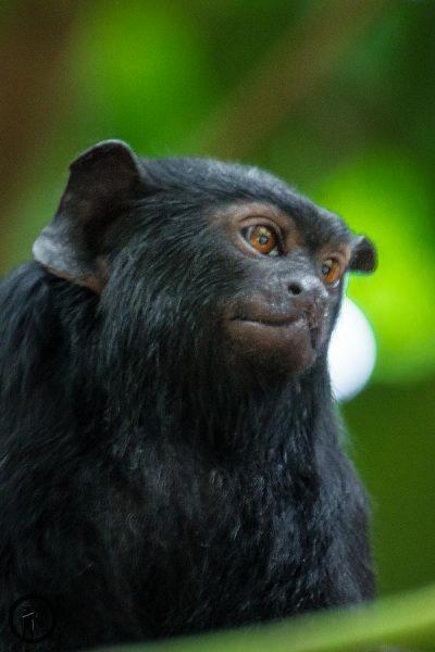 Titelbild zum Artikel Tutorial Tierfotografie – Zoo, Wildlife, Haustier