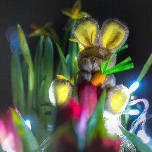 Teaserbild, Verlinkung zum Artikel: Welche Kamera zu Ostern schenken?